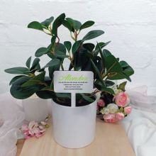 Artificial Plant with Personalised Birthday Picket