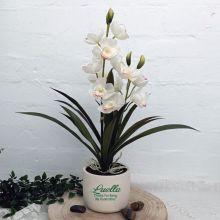 Orchid Cymbidium in Personalised Godmother Birthday Pot