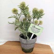 Potted Globe Thistle with Personalised Get Well Sign