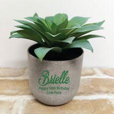 Aeonium Succulent in Personalised  50th Birthday Pot