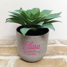 Aeonium Succulent in Personalised  80th Birthday Pot
