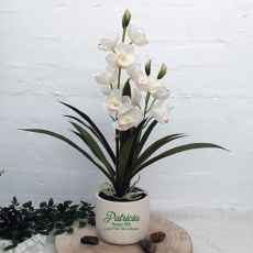 Orchid Cymbidium in Personalised 50th Birthday Pot