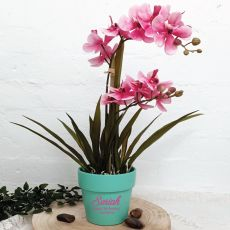 Orchid Ascocenda in Personalised 13th Birthday Pot